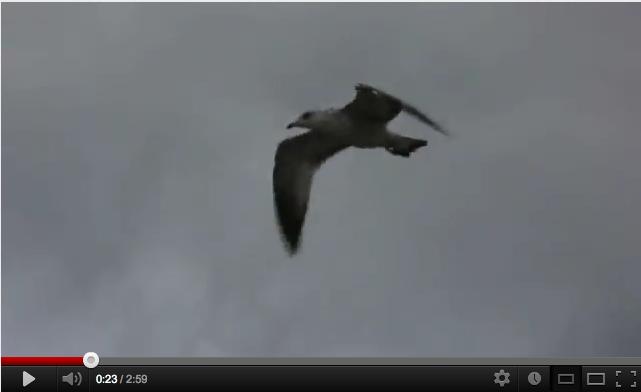 Screen shot 2012-09-02 at 8.52.28 PM